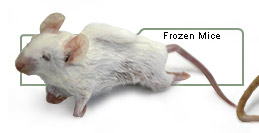 Frozen Mice